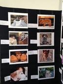 Year of the Dog Photo Exhibition