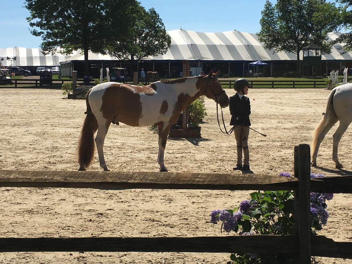 Loudon Benefit Horse Show Results